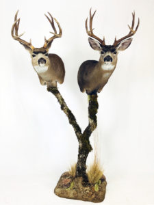 Dunbars Oregon Taxidermy two heads on stand-a